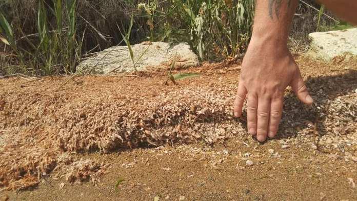 мор креветки