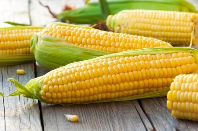 Украина соберет рекордный урожай кукурузы