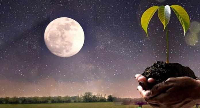 лунный календарь дачника