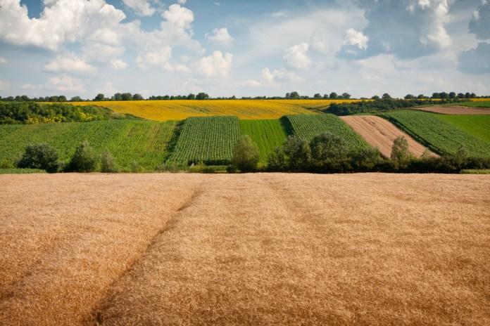 Земельный пай – в наследство: дадут ли субсидию