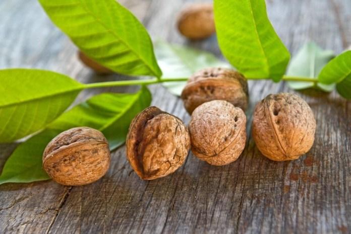 Как ускорить плодоношение ореха