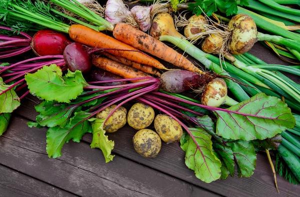 Полезные овощи на грядке