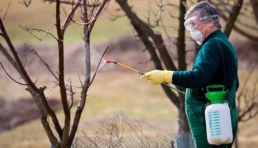 Чем подкормить фруктовые деревья в мае