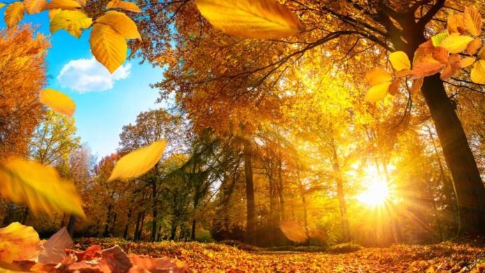 Погода на неділю, 10 жовтня: чи буде сонячно?