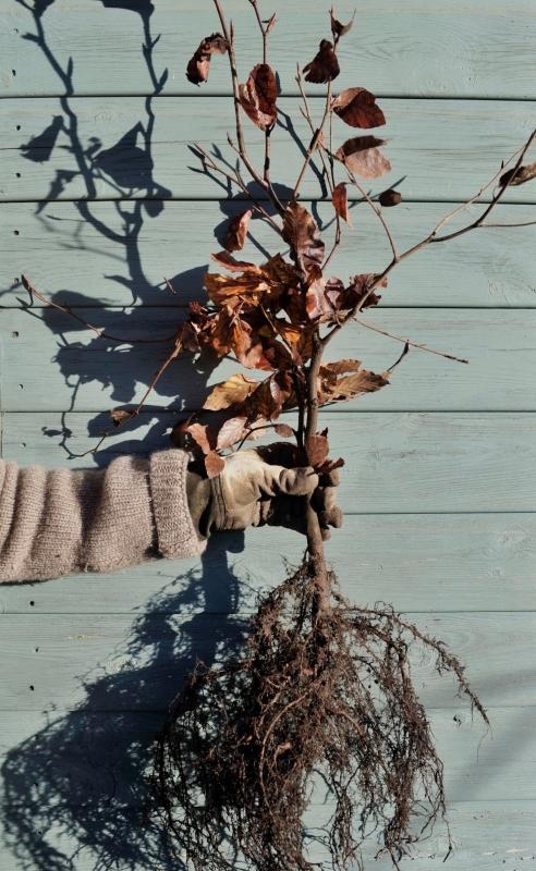 Як зберегти саджанці до садіння