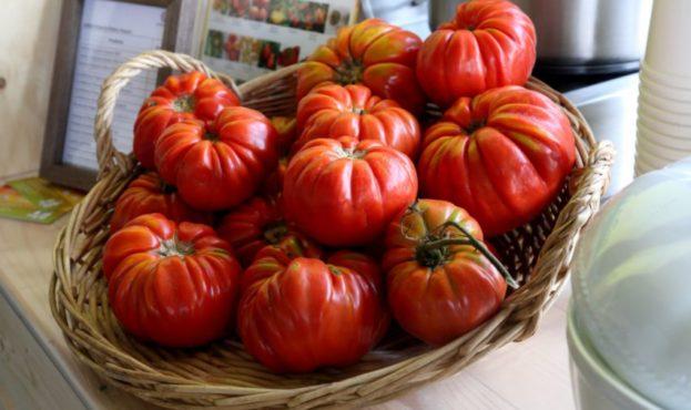 Итальянские фермеры возродили старинный сорт томатов