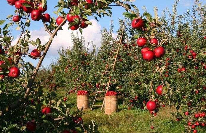 В Винницкой области появятся новые сады