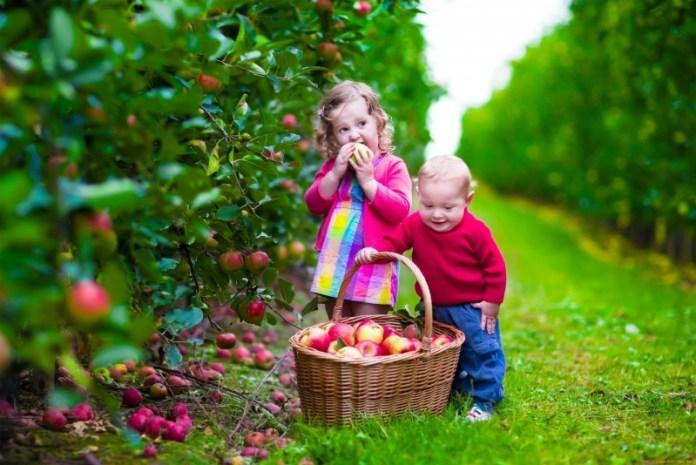 Топ засобів для захисту вашого саду