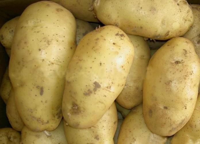 Названы самые вкусные сорта картофеля