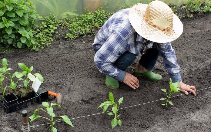 Правила высадки овощной рассады
