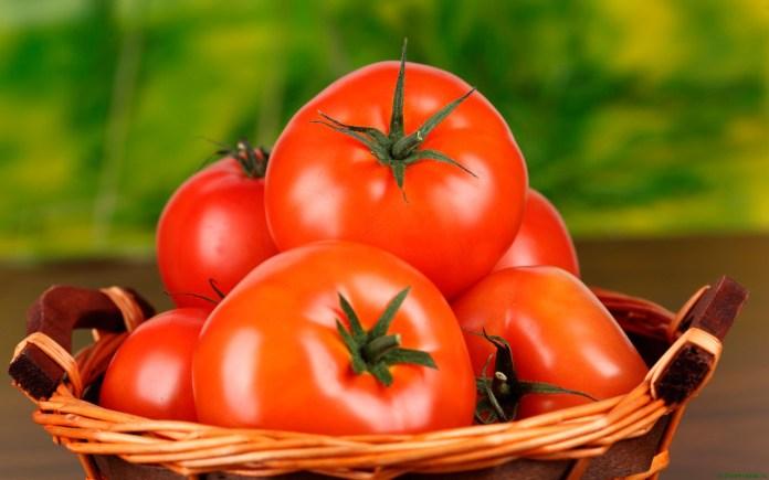 Польские селекционеры вывели новые сорта томатов, устойчивые к жаре