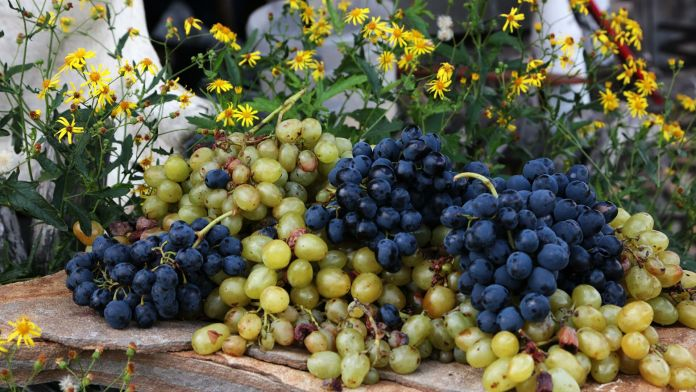 Чому скорочуються площі під виноградниками?