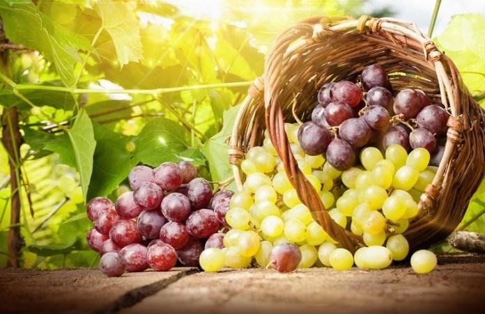 Фруктовая корзина: яблоки подорожали, а виноград — упал в цене