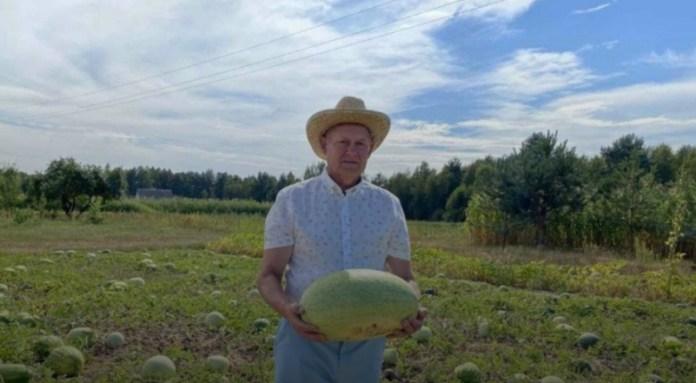 Волынский фермер похвастался арбузами, которые не уступают херсонским
