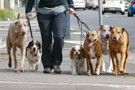 Владельцев собак начнут активно штрафовать за нарушения правил