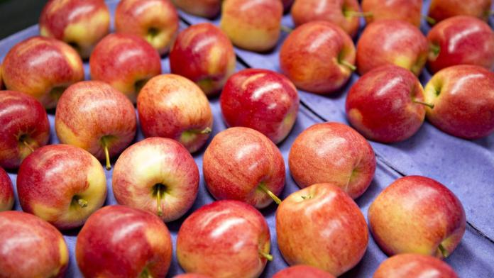 Нам обещают яблоки по 75 гривен за 1 килограмм