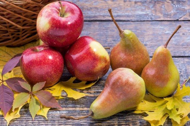 Как нужно собирать яблоки и груши