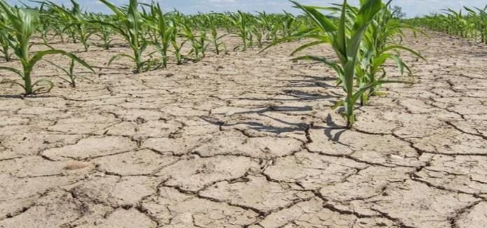 засуха-1024x481