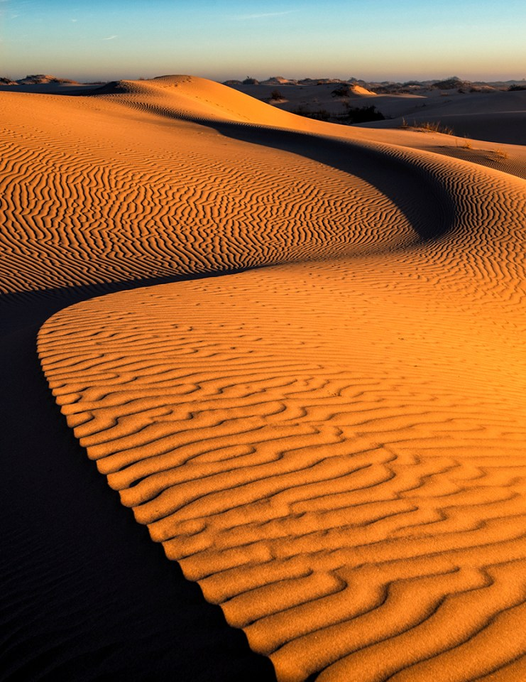 Curves in Dunes by Shawn Hutcherson