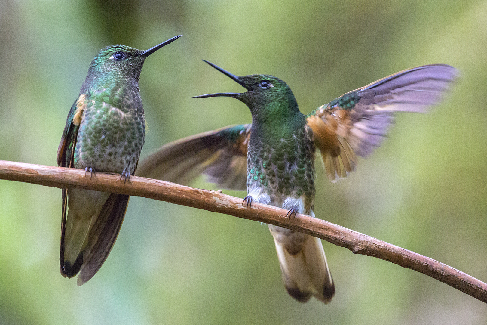 Are You Listening by Patti Mitchell