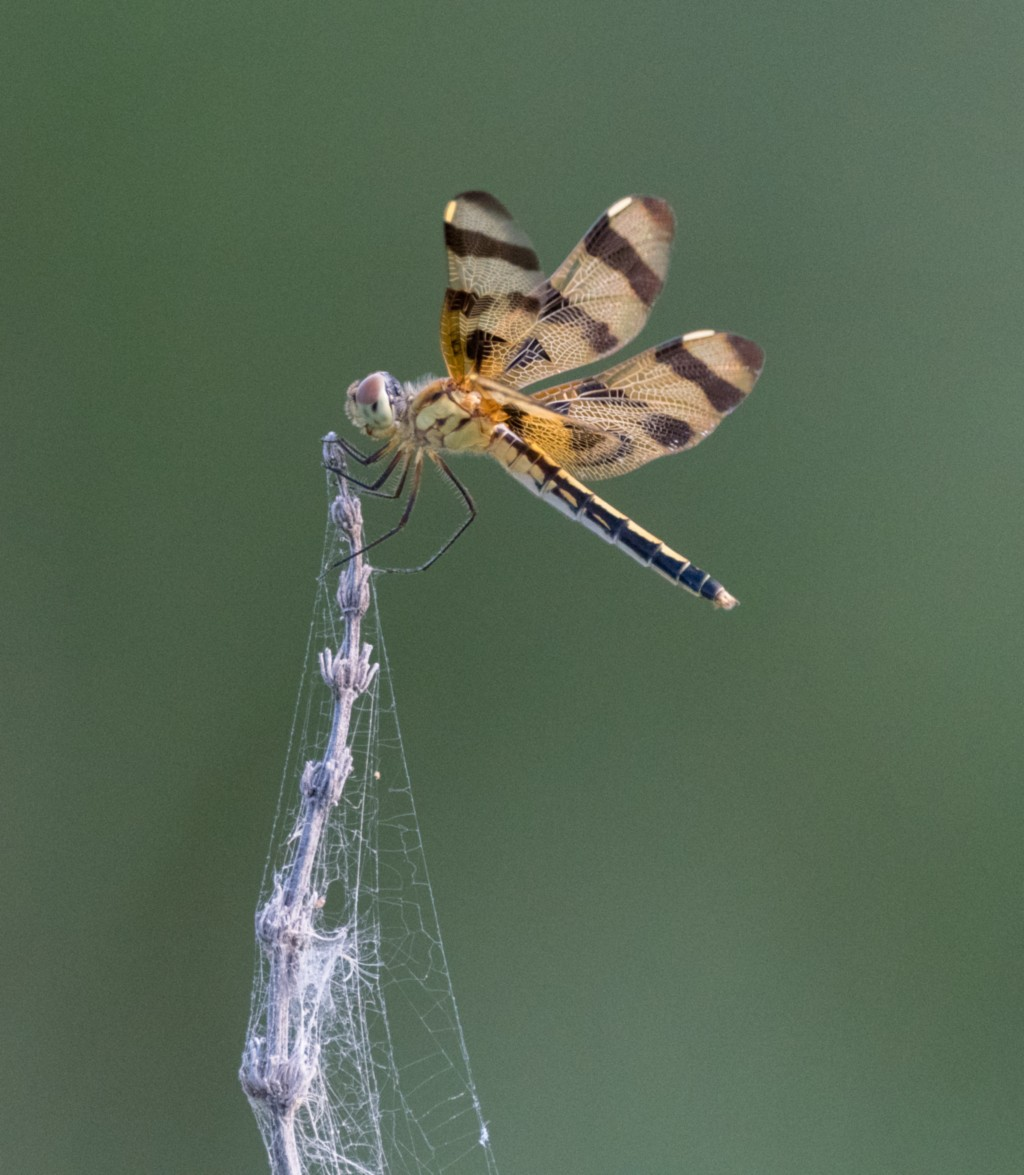 """Second Place: """"Dragonfly at Rest"""" by Dave DeVore, Class 1"""