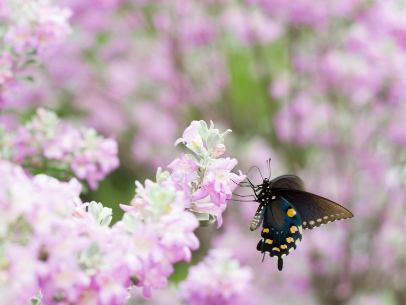 Butterfly Beauty by Ashley Piel