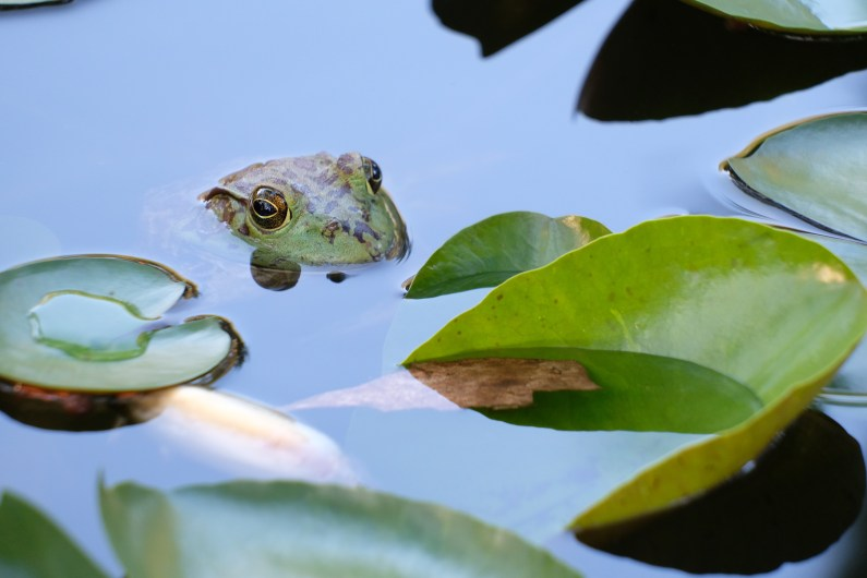 I see you by Arlie Pfeifer