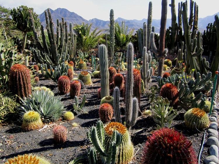Ogród kaktusów na Gran Canarii. Fot. Kakteenklaus
