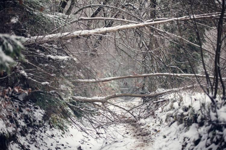 Droga zawalona drzewami. Fot. Ostre Kadry