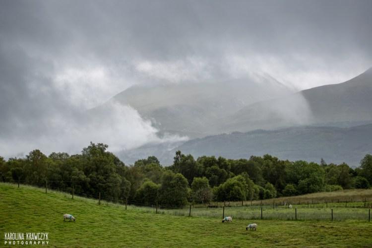 Owce, chmury i góry tonące w nich. Fot. Karolina Krawczyk