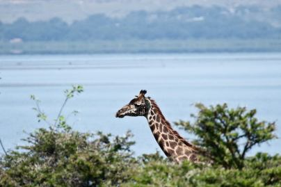 May 2007 Lake Naivasha National Park, Kenya, East Africa