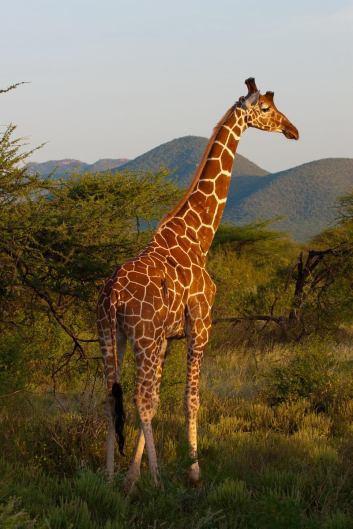 May 2007 Samburu, Kenya, East Africa
