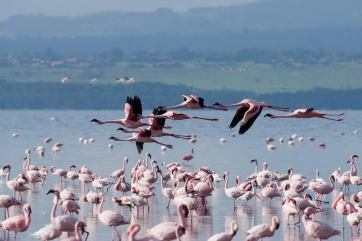 May 2007 Nakuru Lake, Kenya, East Africa