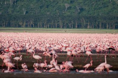May 2007 Nakuru Lake, Kenya, East Africa