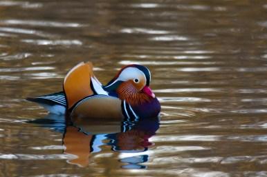 January 2009 Peg's Pond, Richmond Park, London, UK