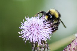 August 2013 Macro, Hatfield Forest, Essex, UK