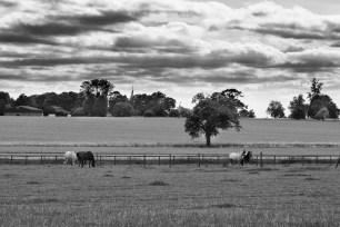 August 2013 Hatfield Forest, Essex, UK