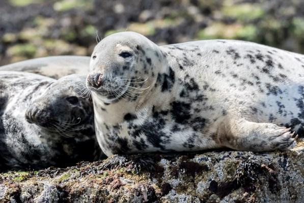 July 2015, Farne Islands, Seahouses, England, UK
