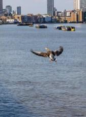 April 2020, Millennium Pier, Isle of Dogs, London, UK