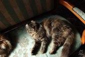 キャットサロン。猫好きにはたまらない空間ですね。