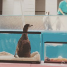 ペンギンの赤ちゃん♪
