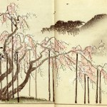 GION-weeping-cherry-library-of-congress