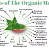 Moringa-Oleifera-Drumstick-Tree-infograph