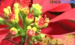 ビーバップ!ハイヒール 身近な花の生存戦略を振り返る