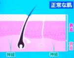 NHKあさイチ 静電気の起きやすさは肌の状態に関係?など振り返る