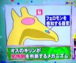 ホンマでっか!?TVを振り返る 池田先生の動物に詳しくなれる知識