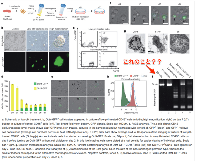 Stimulus-triggered_conversion_of_lymphocytes_into_Oct4-GFP__cells____Stimulus-triggered_fate_conversion_of_somatic_cells_into_pluripotency___Nature___Nature_Publishing_Group