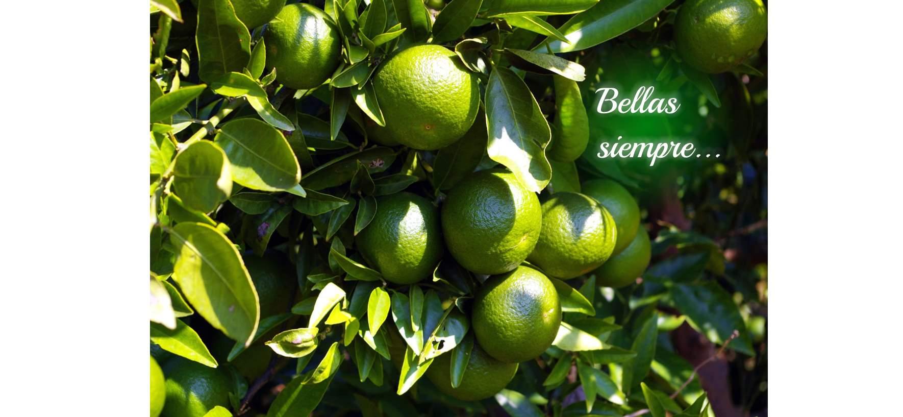 Naranjas o verdes... ¡Bellas Siempre!