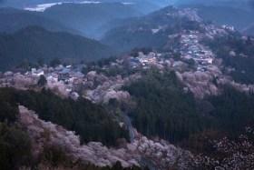 金峯山寺桜