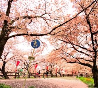 高田千本桜・大中公園